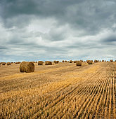 Farmers field full of hay bales with cloudly sky