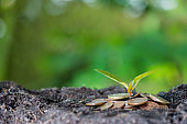 Small plant growing in the garden. Fresh start of the day. Save environment and new transformation life concept