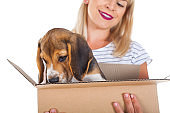 Woman holding beagle puppy in a box