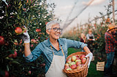 Woman smiling when picking up apples at the farm