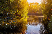 quiet calm water with grass and bright evening light over the city pond autumn