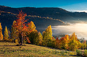 gorgeous morning light and fog in autumn