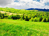 beautiful mountainous countryside in springtime