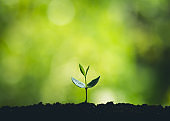 ํYoung plant tree in nature