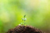 Planting trees Tree growth Seeding Fourth step seed is a tree