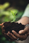 Plant a tree The soil and seedlings in the grandmother's hand