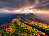 Mountains during flowers blossom and sunrise. Beautiful natural landscape at the summer time