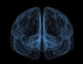 Brain neural networks and connections.