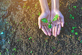 Plant seedlings with love on the trees.