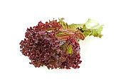 Red coral lettuce on white background