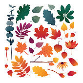 Set of autumn leaves. Design elements of red color for the autumn season. Silhouettes of maple leaf, oak leaf, sea buckthorn and physalis. Organically natural branches and plants. Vector.