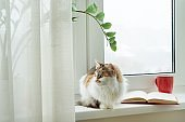 Winter time, cat sitting on the windowsill looking out of the snow window. On the windowsill open book and cup with hot drink.