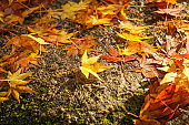 Fallen leaves on the stone pavement