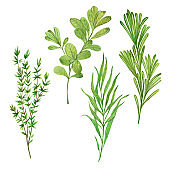 thyme, rosemary, tarragon, marjoram