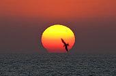 Photo Bombed Sunset