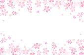 Japanese cherry blossom abstract on white background