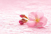 Japanese cherry blossom isolated on pink traditional paper background