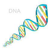 DNA Strands Icon