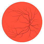 Eye Veins and Vessels