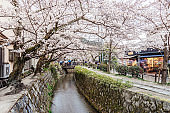 Philosopher's walk in Kyoto - Cherry blossoms season