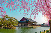 Gyeongbokgung Palace with cherry blossom in spring,
