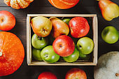 Ripe apples in a box with pumpkins and pears on dark wooden background. Autumn seasonal image. Top view