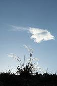 Japanese Plume Grass Over Blue Sky