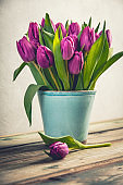 A bouquet of purple tulips in a vase