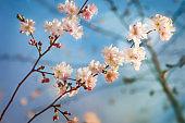 Springtime spirit