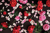 Gothic wallpaper. Postcard for valentine's day. Rose flower pattern on black background. Red summer flowers with green leaves. Pink roses for valentine's day card. Dark gothic postcard