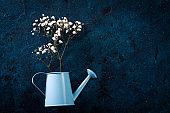 white flowers in a blue watering can n a blue background. Spring concept
