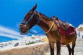 Donkey taxis in Santorini