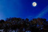 Looking up at treetops with full moon