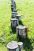 Stepping tree stump on wetlands