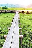 Wooden footbridge into the greens