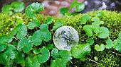 Glass globe on the mossy land