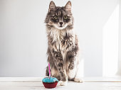 Cute kitten and a festive cupcake
