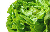 Boston lettuces