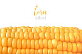 Close-up on oiled corn on the cob isolated on white, text space
