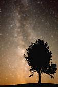 Lonely maple tree under the stellar night sky