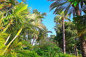 Polynesian tropical paradise relax, under shadow of coconut palm trees foliage – Hawaii islands, USA