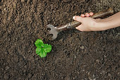 Women's hands put a sprout in the soil, close-up, view from above, Concept of gardening, gardening. copy space