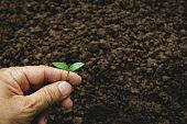 ้Hand of person holding young plant putting on the soil ground in nature.