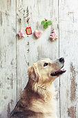 Dog and christmas decoration