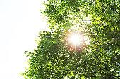 Fresh green and sun light background