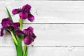 purple iris flowers bouquet on white wooden background. flat lay. top view with copy space