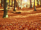 Fallen leaves in autumn forest at sunset on woods background