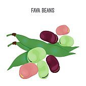 Exotic fava beans heap, nutritious and healthy food