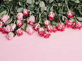 Roses background of pink roses ready borders for valentine