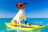cool summer surfer dog